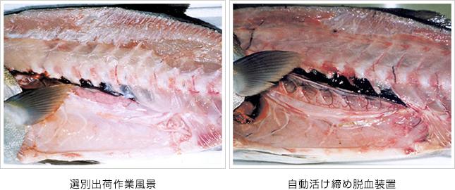 kanpachi01-02